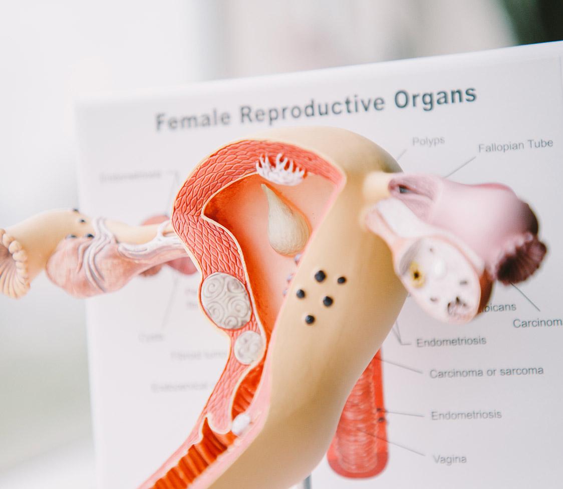 Gynaecologist Sydney Dr Jinny Foo
